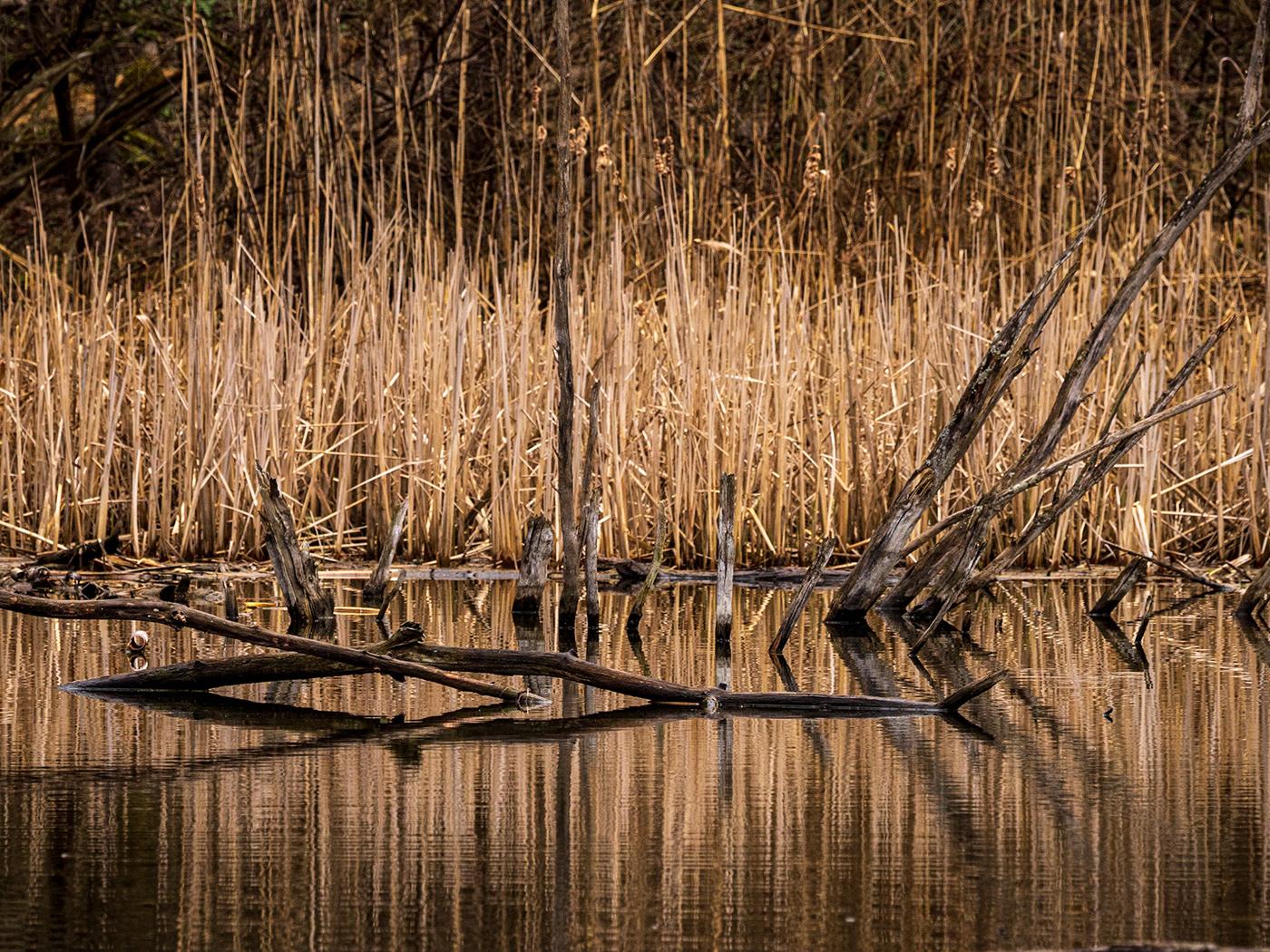 birds Nature olympus photo walk super zoom wildlife highland creek Ontario