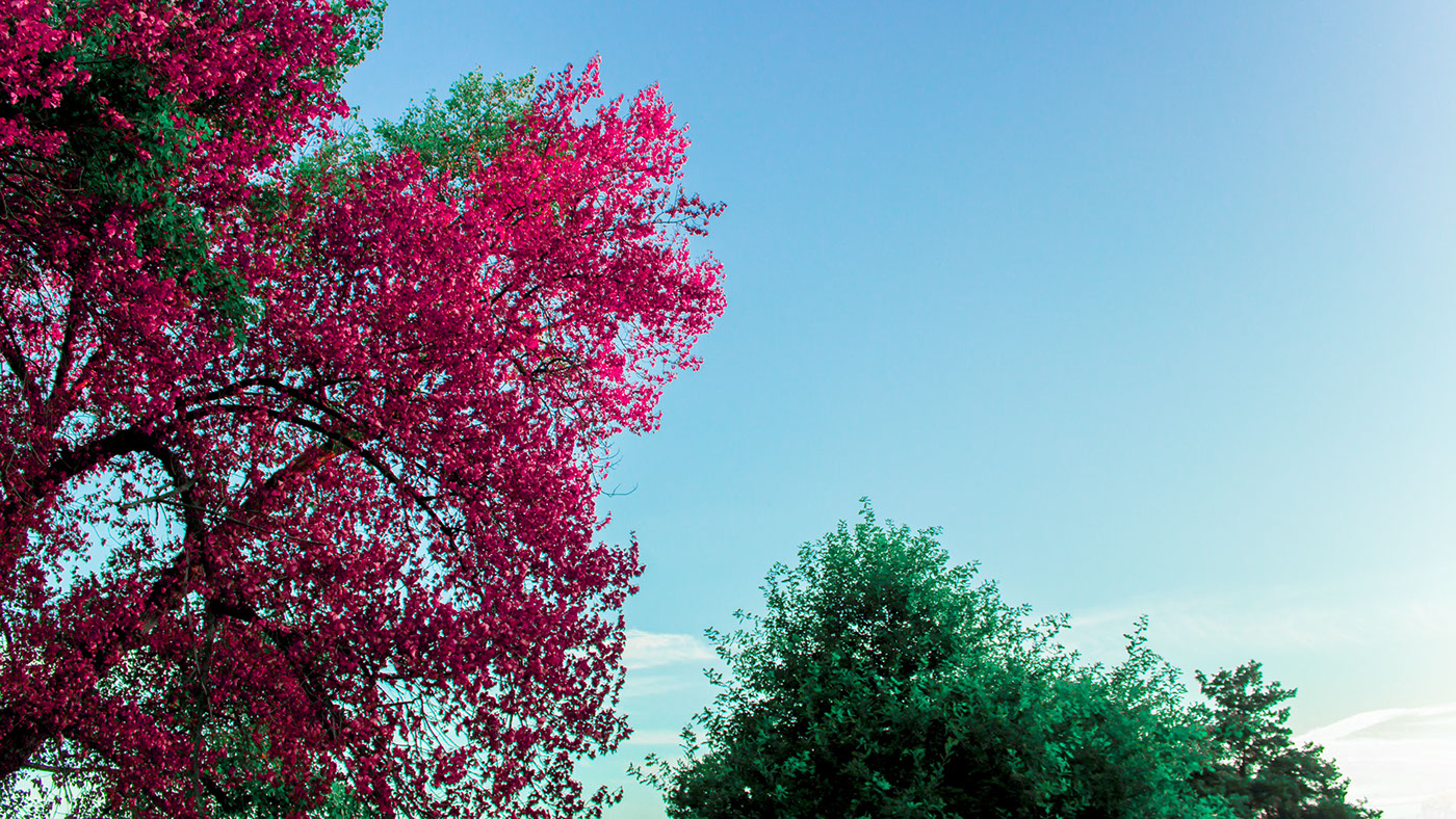 colour vibrant