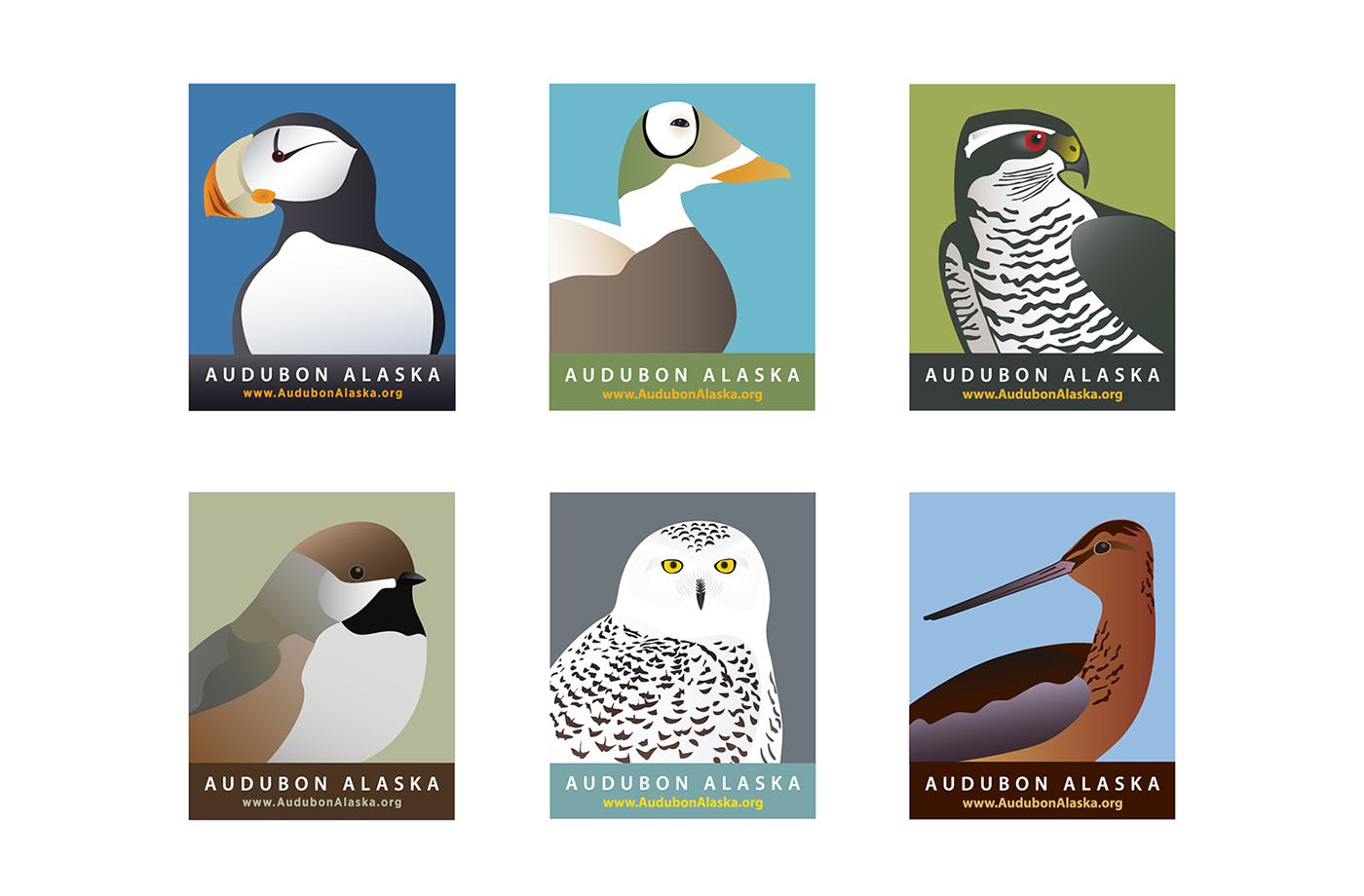 Audubon Alaska Watchlist Bird Illustrations On Behance