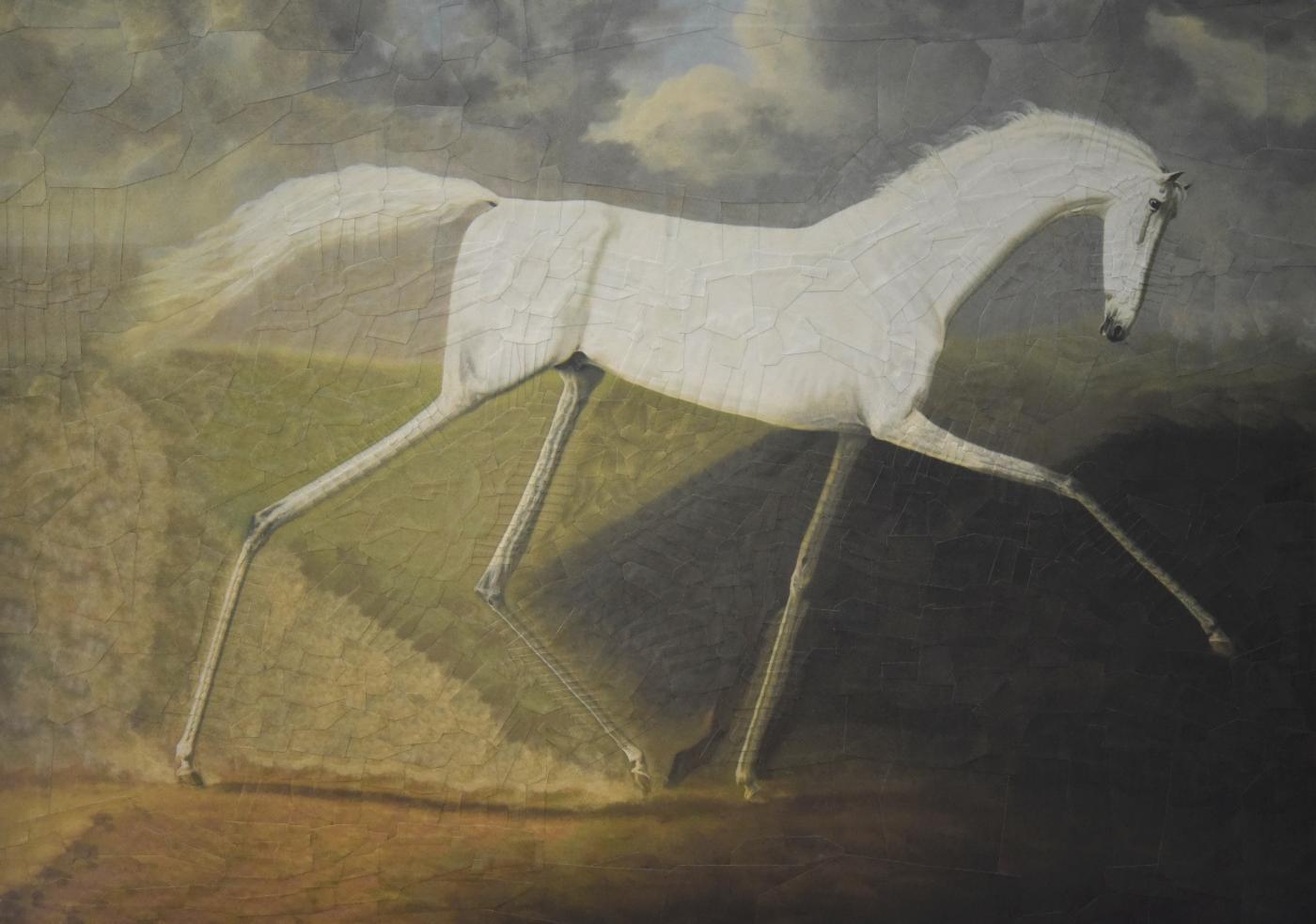 collage equestrian horse horse illustration Horse portrait horses ILLUSTRATION  paper collage