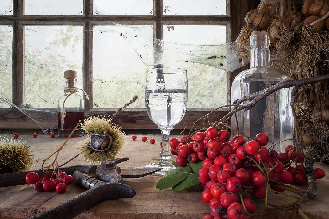stillife wine schilcher Vogelbeere Food  foodstyling ILLUSTRATION
