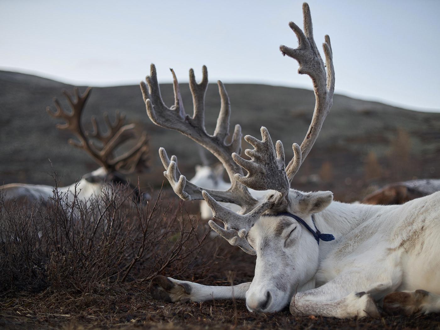 Image may contain: animal, mammal and horn