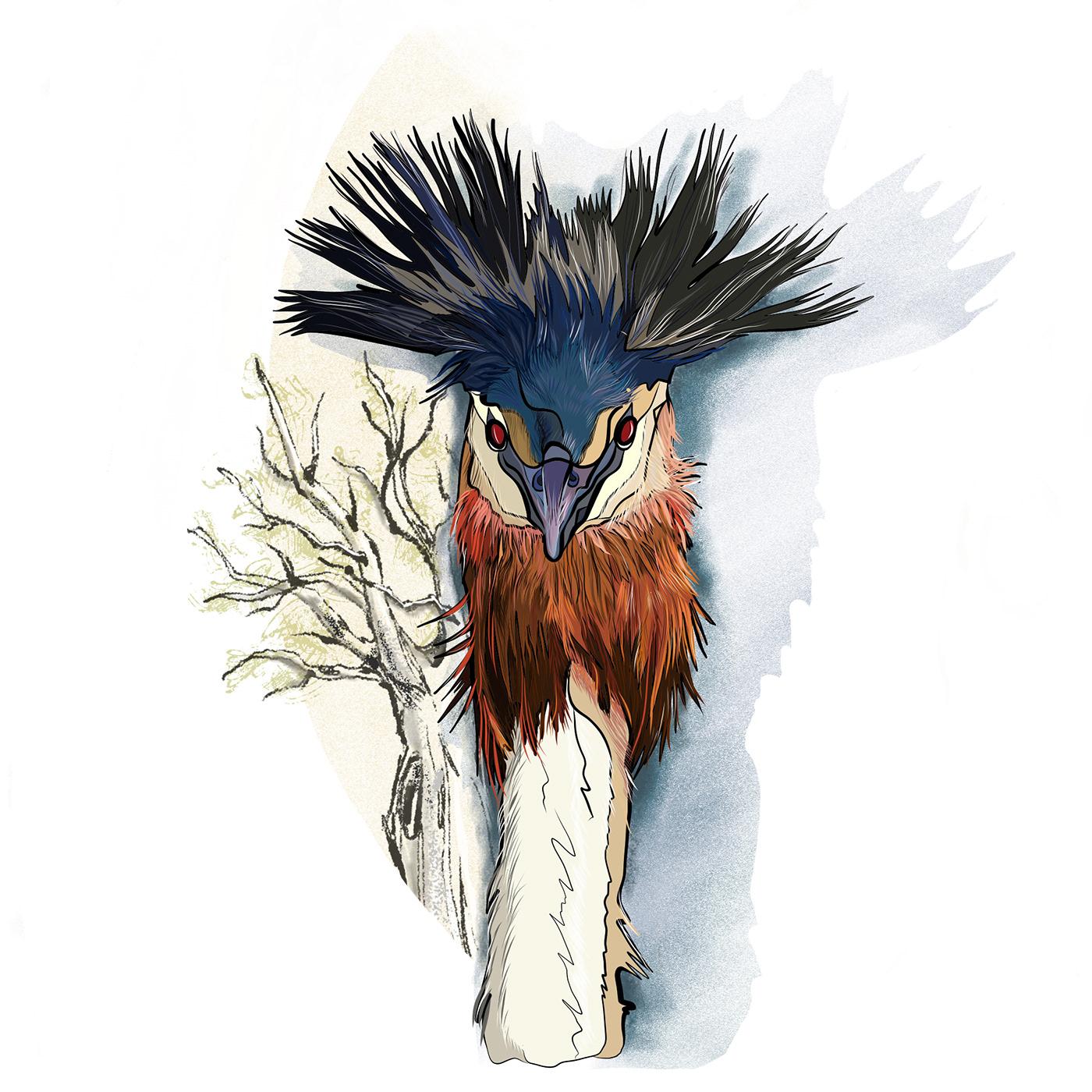 colors,Grafikdesign,ILLUSTRATION ,Nature,birds
