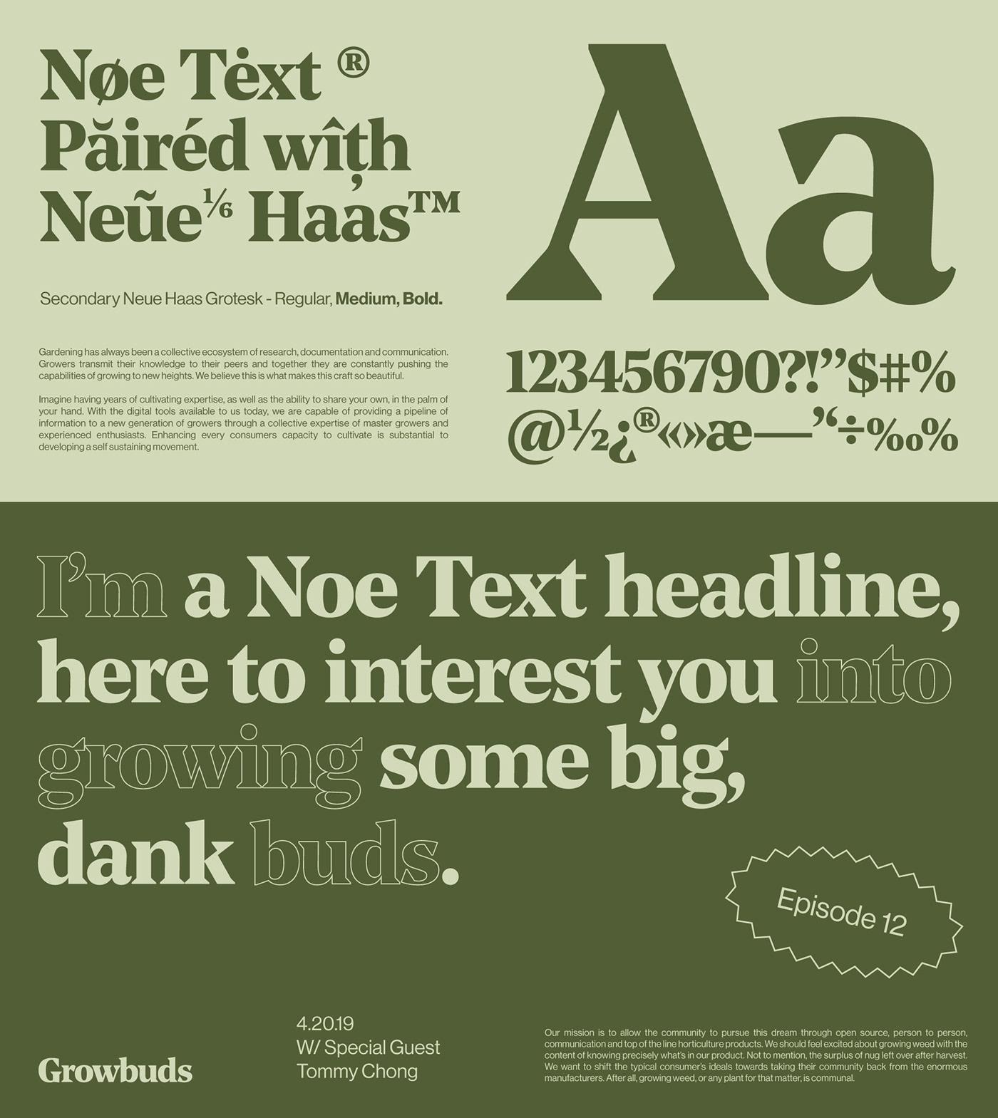 branding  brand identity Layout grid identity typography   motion kinetic typography