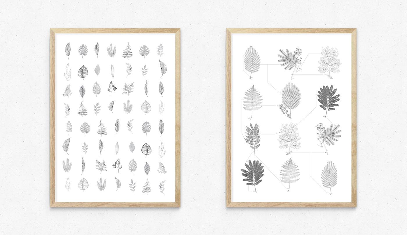 "pinna marca ""Branding"" botanica Planta suculenta cuadro frame natural handmade stamp diseño diseño gráfico brand"