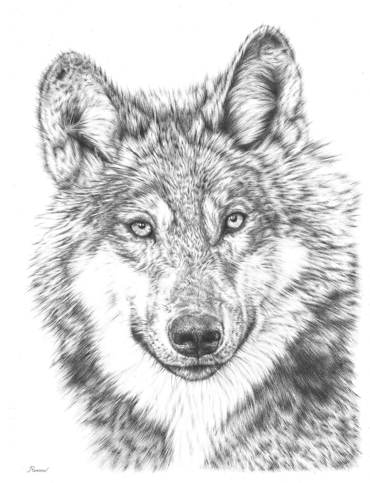 Wolf pencil drawing on behance