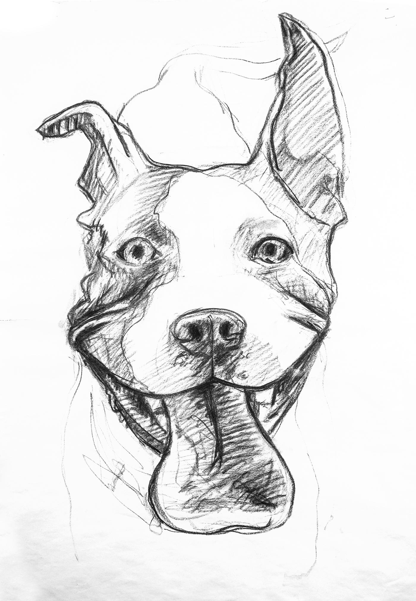 Крутые рисунки собак карандашом, старым новым годом