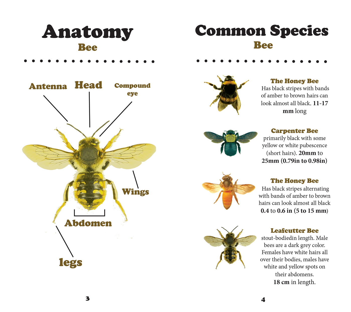 Bees and Wasp Info-Graphic on Behance