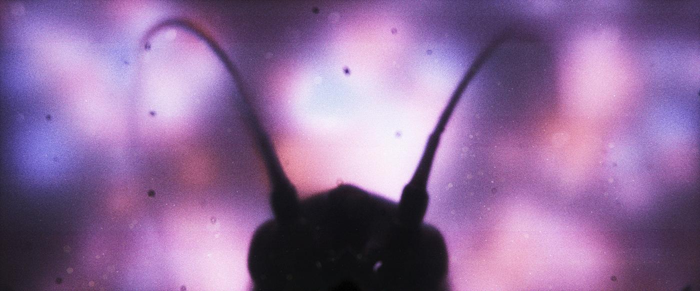 aftereffects art bug c4d CG cinema4d dark octane