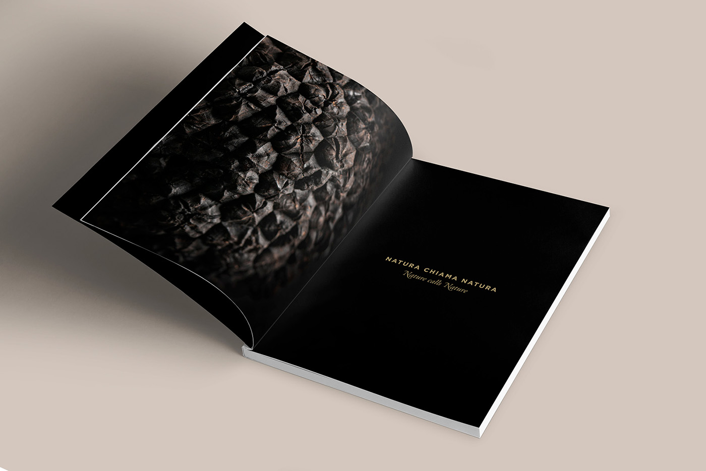 brochure truffles tartufi raffinerie