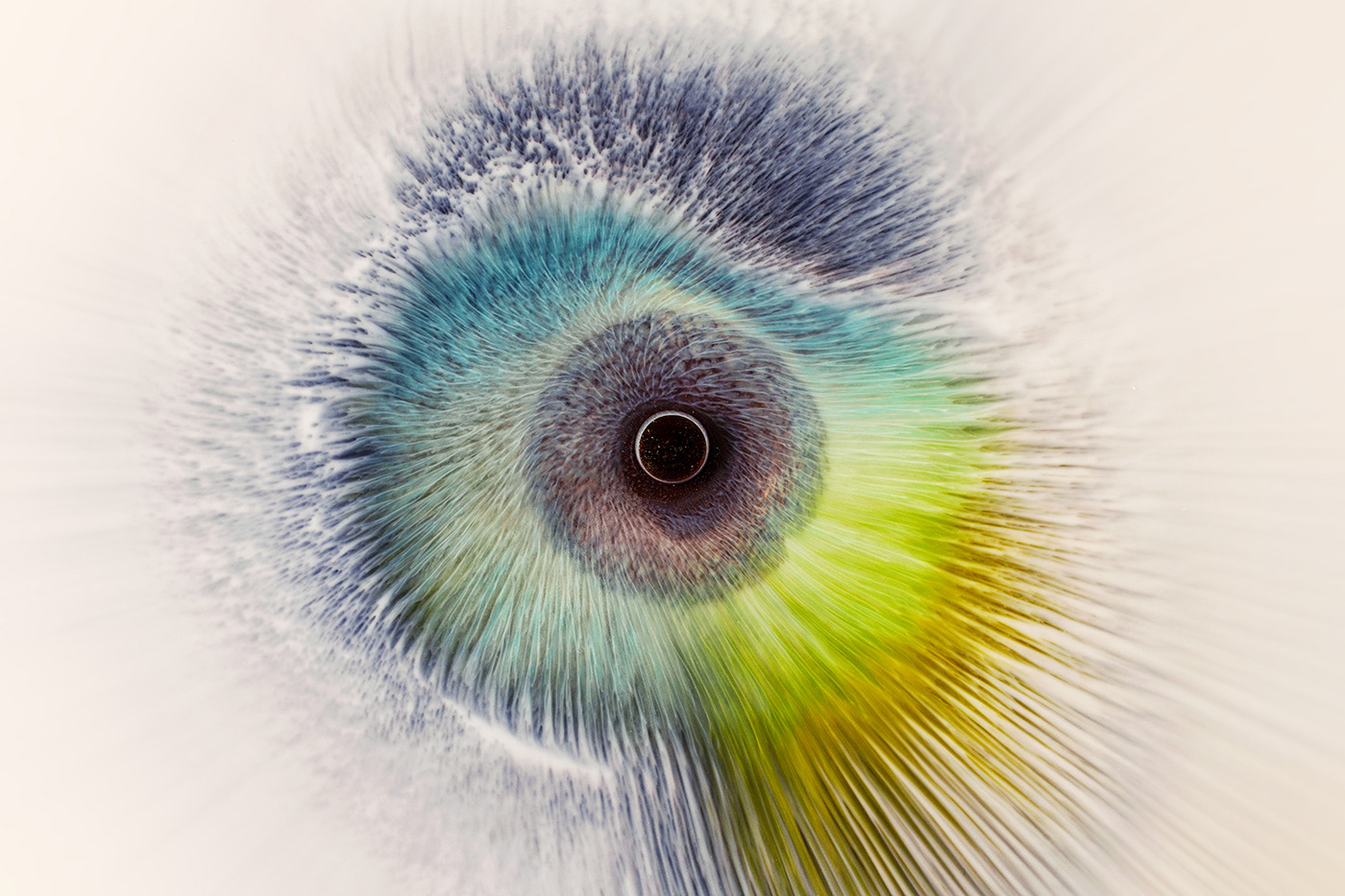 abstract,art,cryptoart,eye,nft,Photography ,videoart