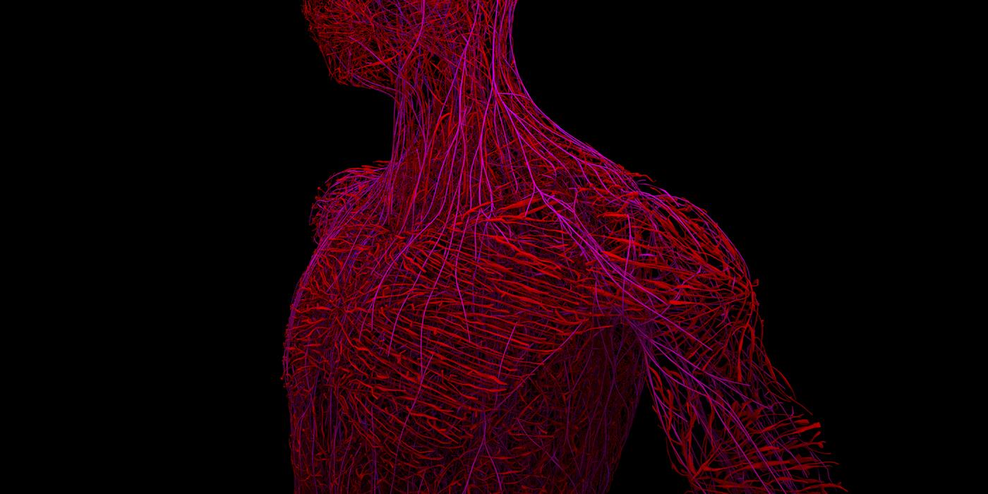 houdini Visual Effects  vfx Maya arnold generative algorithm biomemetic body Procedural