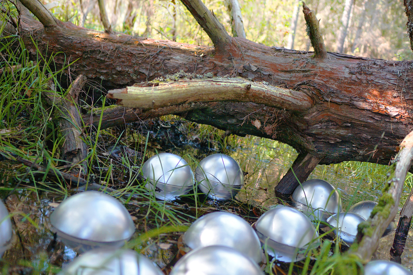 forest UFO extraterrestial exoplanet relicts walk storm aftermath