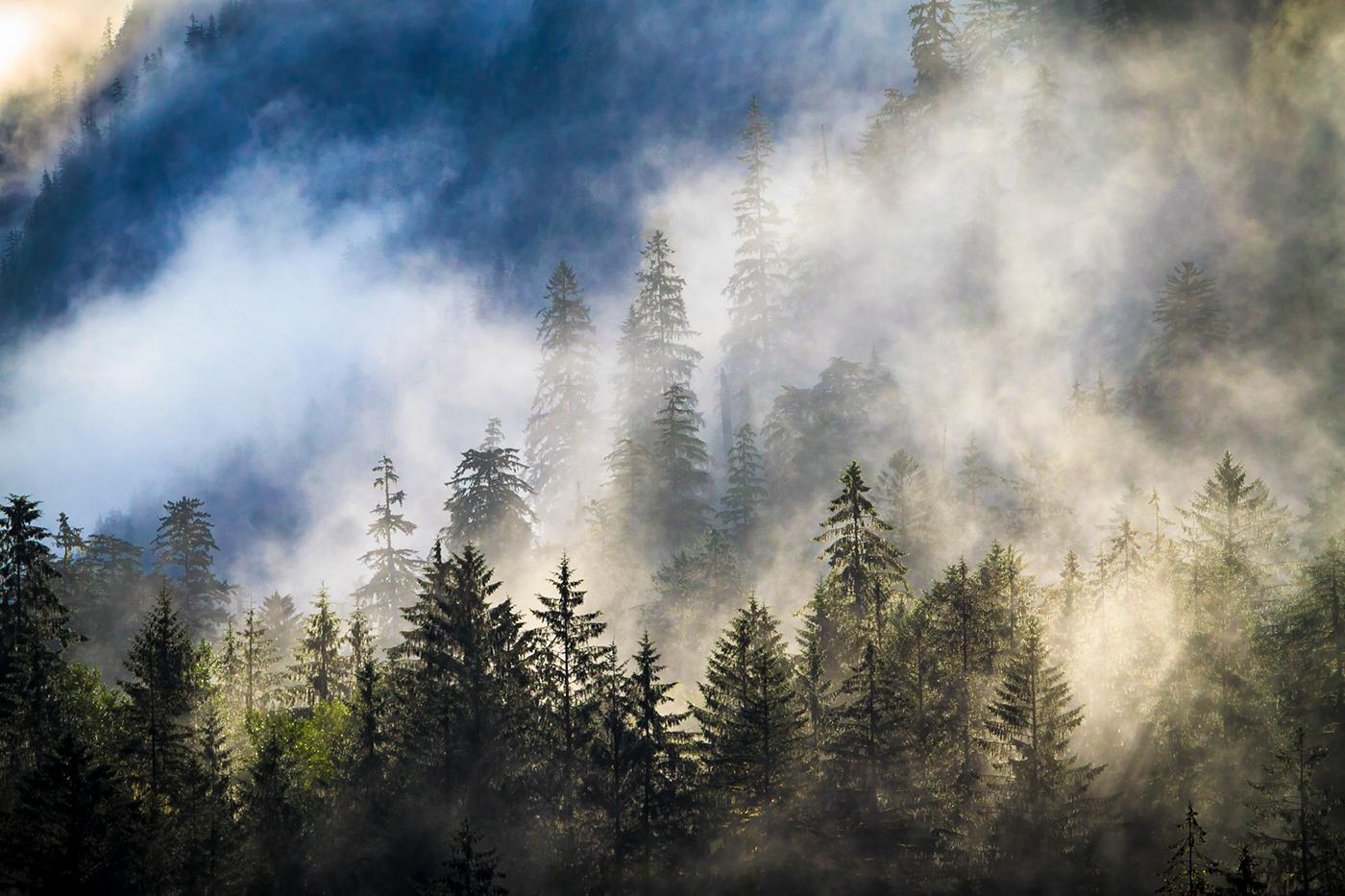 wildlife Khutzeymateen Grizzly Bear Landscape forest sanctuary wilderness north america bears british columbia