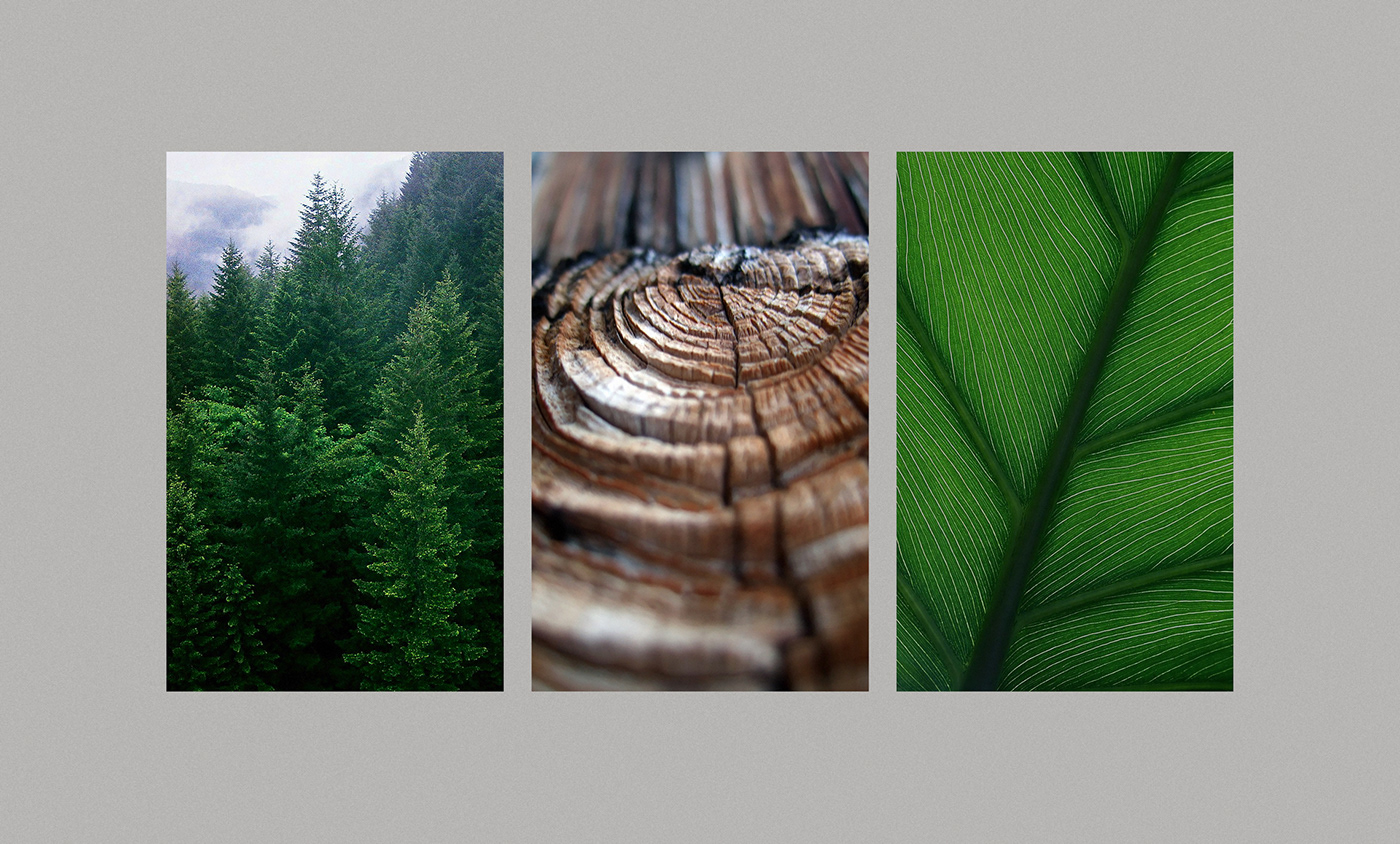 architecture,Ecommerce,forest,garden,gardening,geometric,landscaping,Nature,Tree ,Website