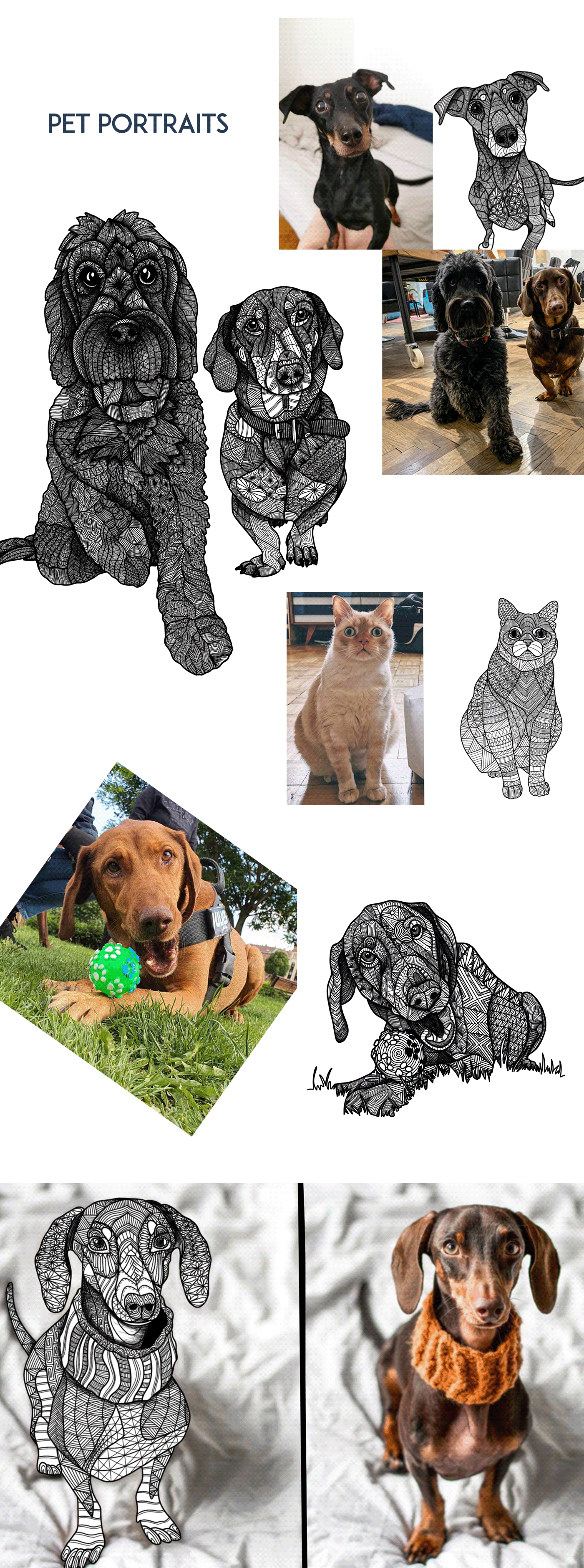adultcoloring coloring Drawing  graphicdesign lineart Pet portrait zentagle