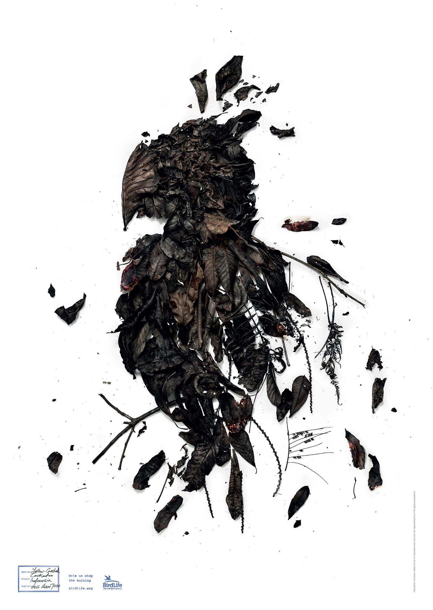 bird life indonesia birdlife Cockatoo owl kingfisher forest fire burnt
