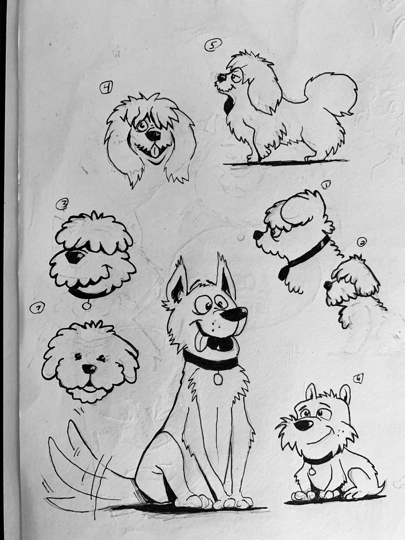 book cover Character design  childrens book childrens book cover coloring dogs ILLUSTRATION  inking