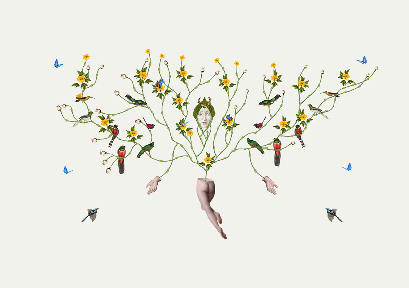 collage artcollage ILLUSTRATION  illustracion naturaleza Nature art birds photoshop graphicdesign