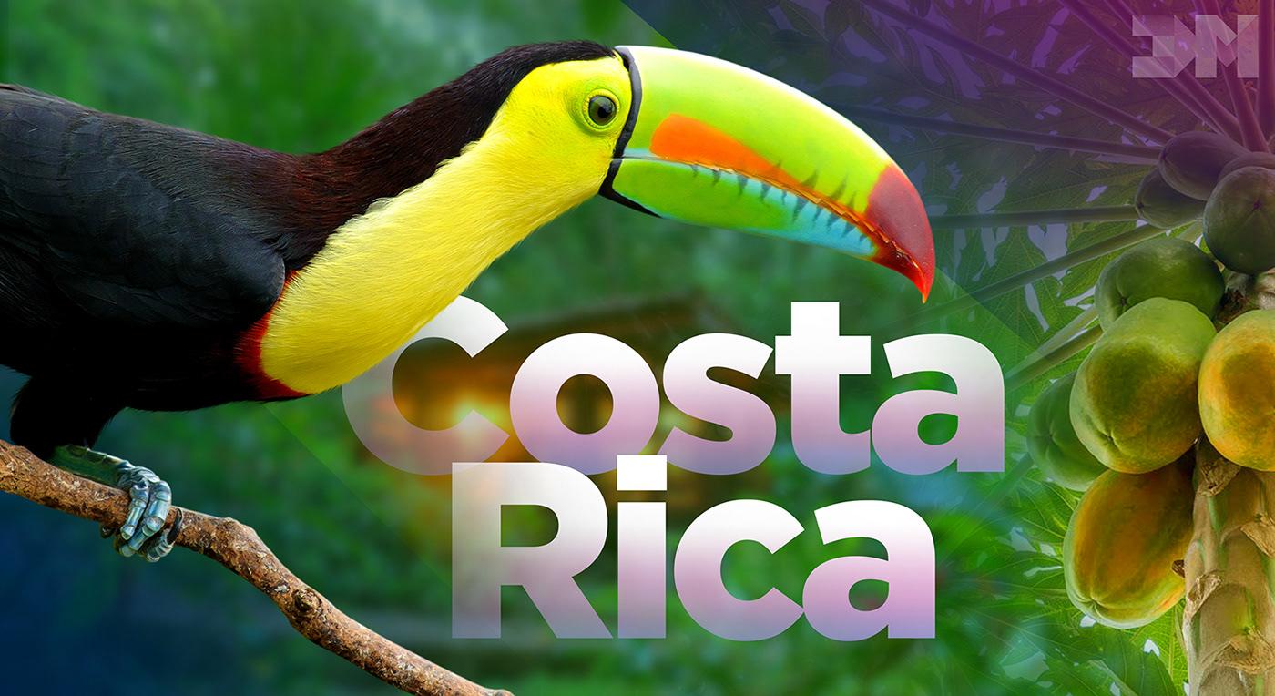 Costa Rica papayas rainforest toucan Tree