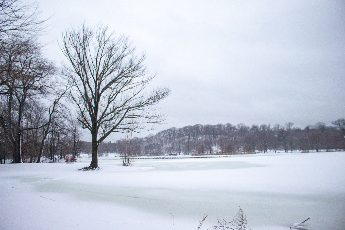 Brooklyn Nature New York snow snowing storm winter