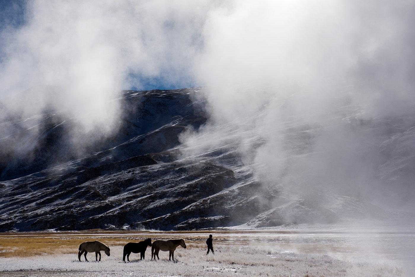 Changpa nomad leads horses through snow in ladakh