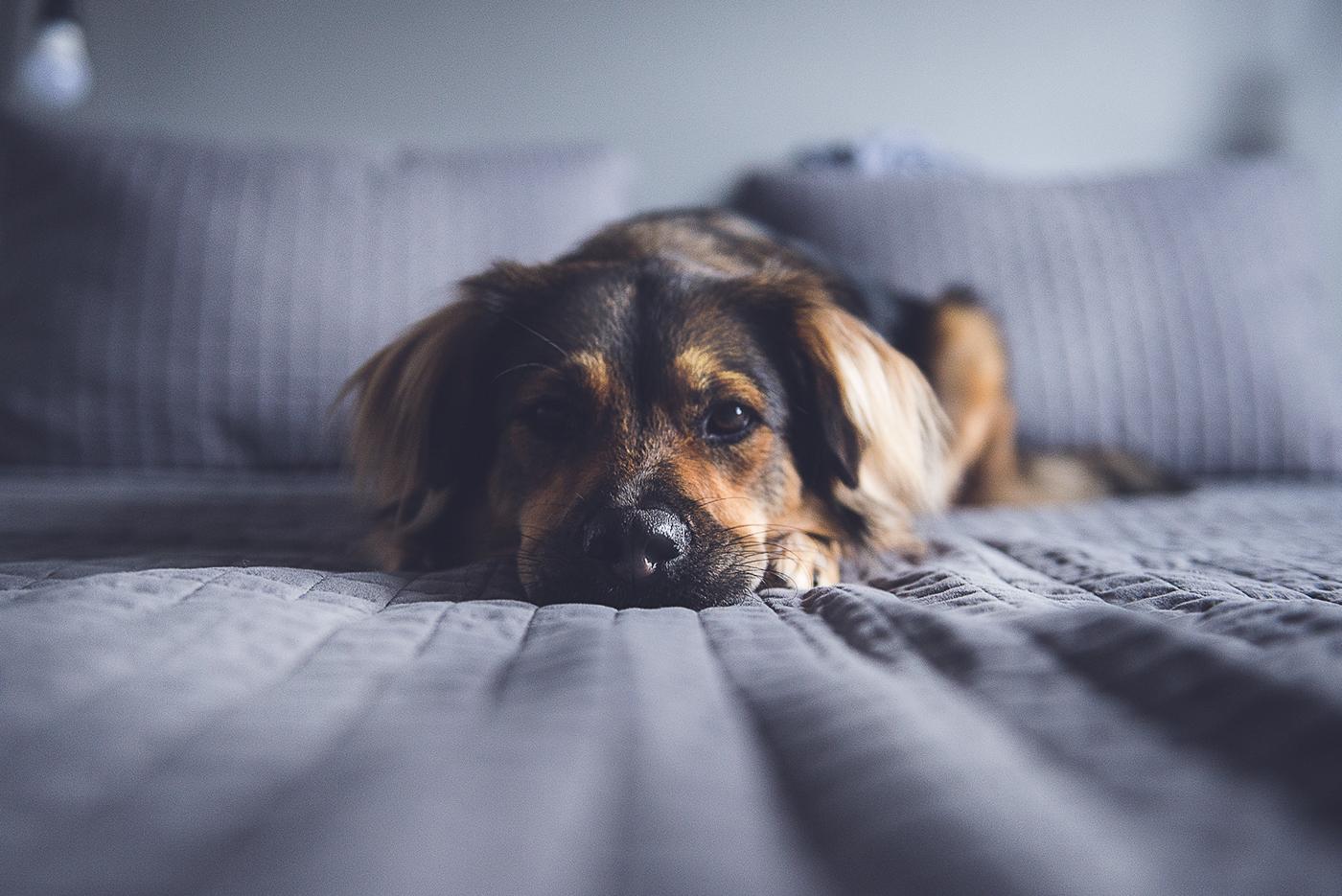 pet photography fotografia de estimação dogs cães Mutts