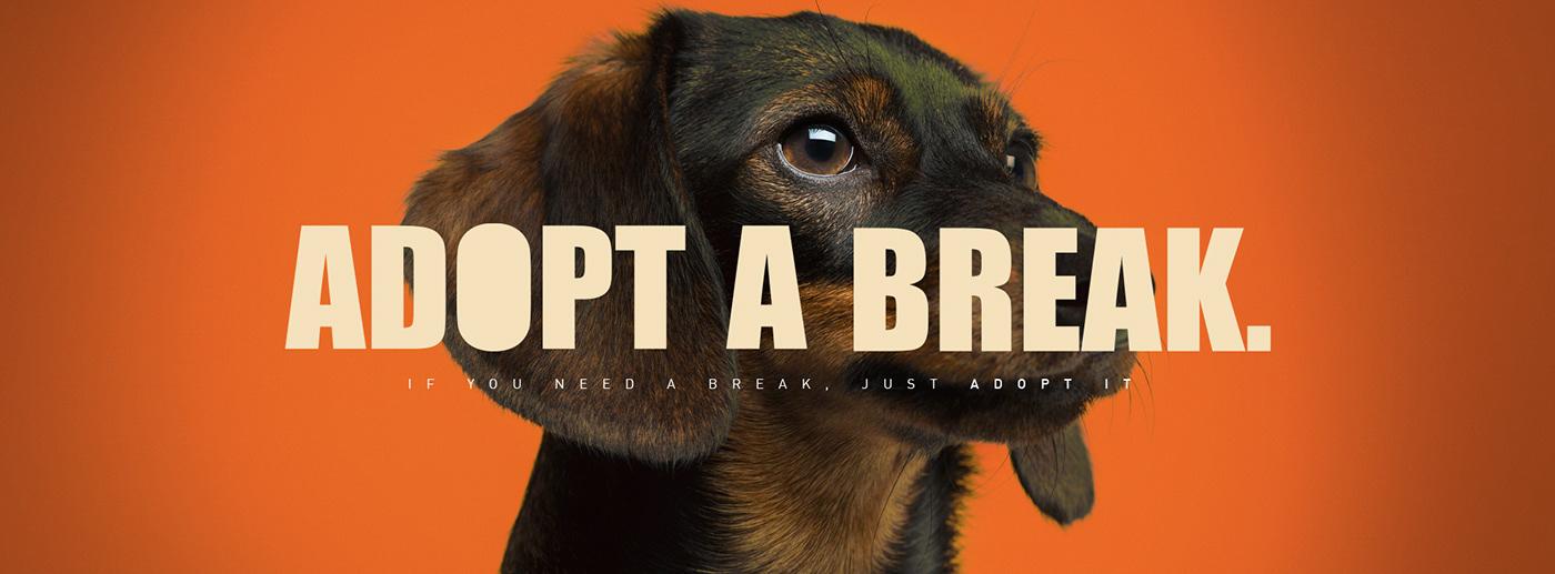 adoption Advertising  break dogs pony malta
