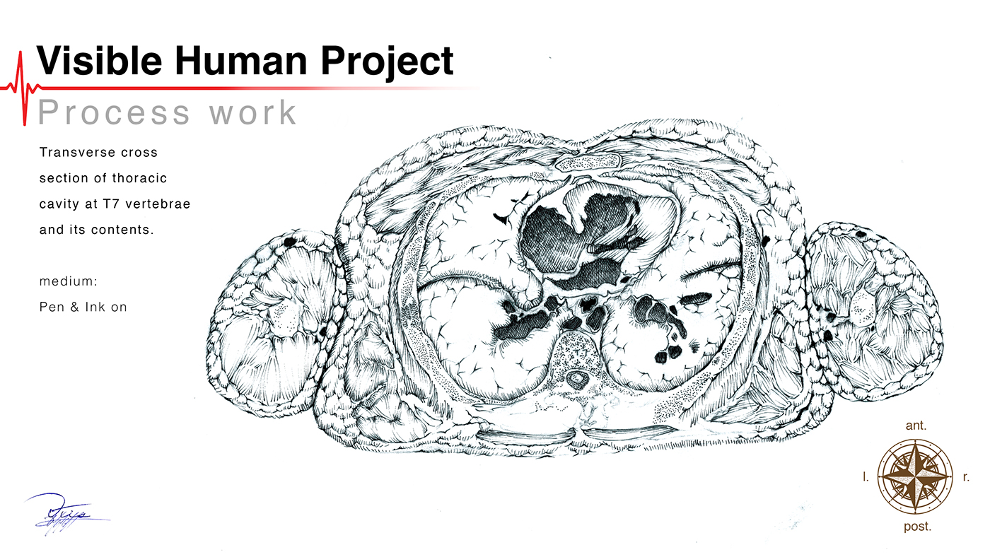 Visible Human Project In Creative Process On Behance