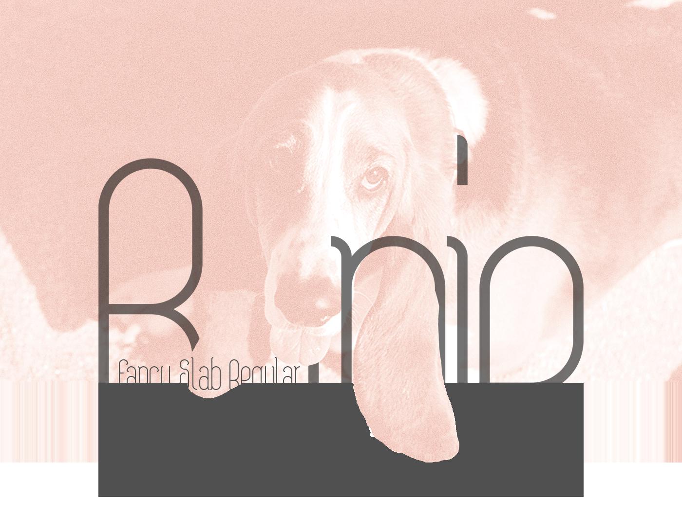 Bonie Typeface Font Download