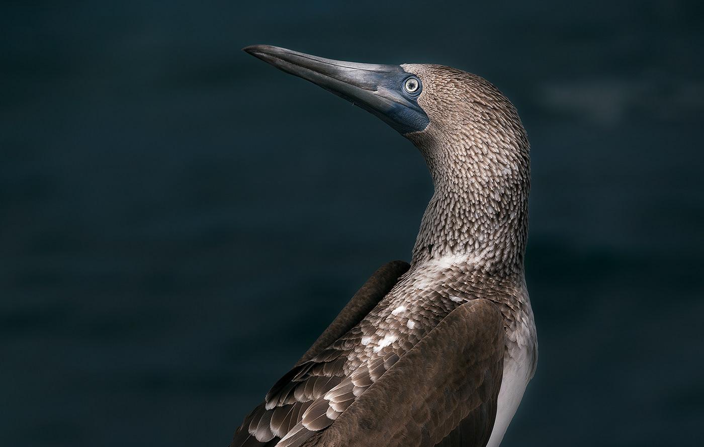Image may contain: bird, animal and aquatic bird