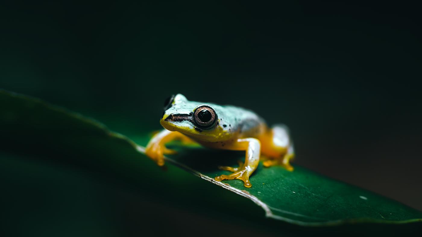 wildlife animals madagascar africa jungle green animal chameleon forest Island