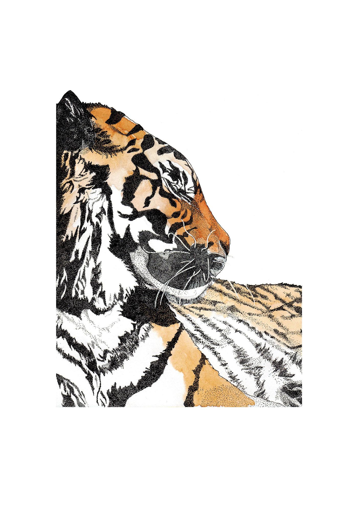 Image may contain: animal, carnivore and tiger