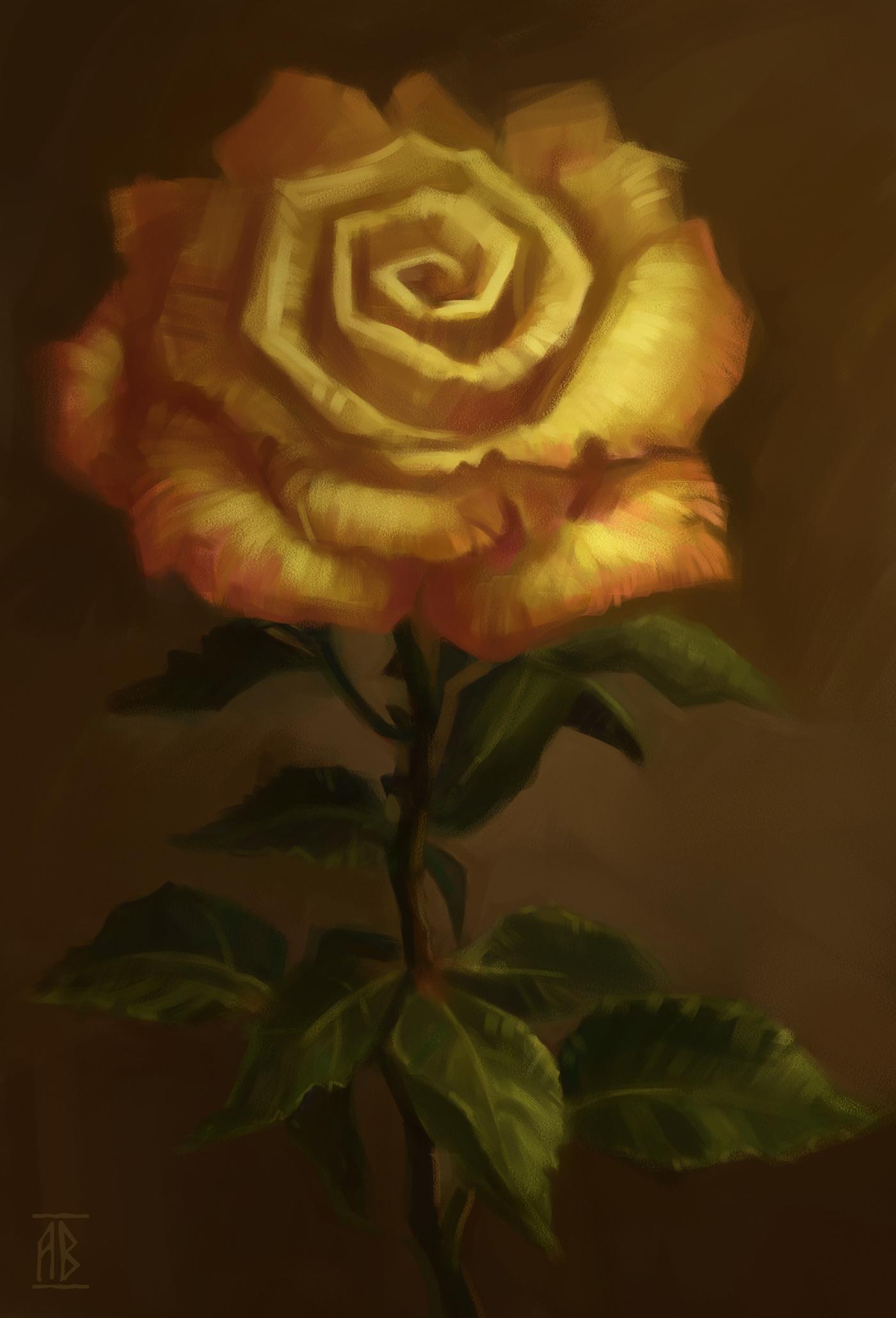 豐富的19張玫瑰花水彩素描欣賞