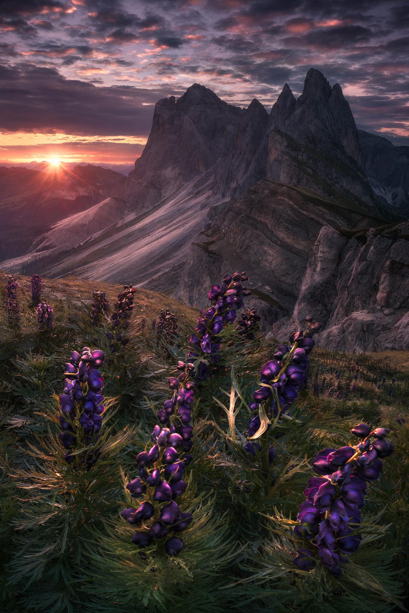 alps,dolomites,Flowers,Landscape,landscape photography,Nature,nature photography,Switzerland