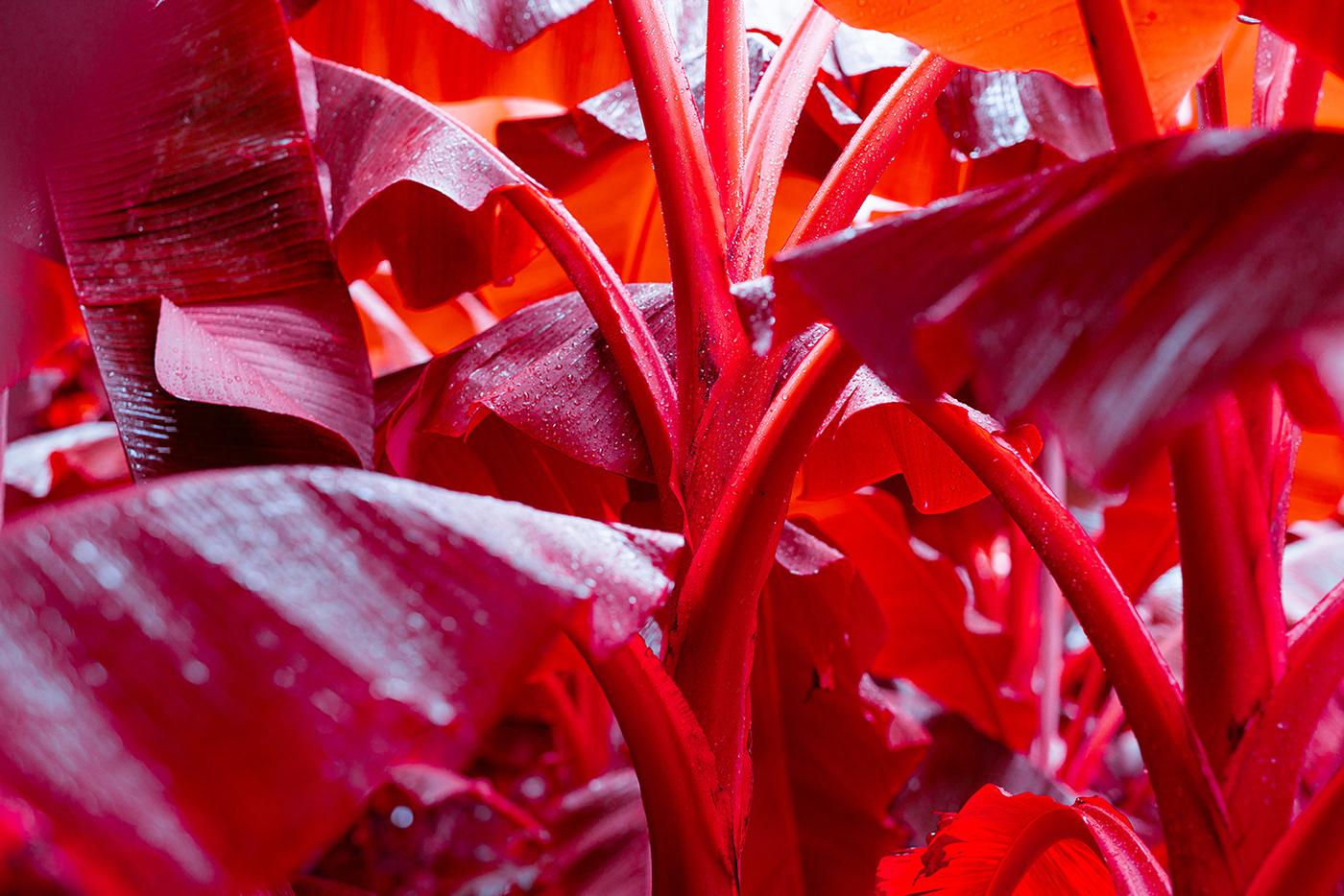 palms,acid,red,tropic,Plant,leaf,summer,surreal,Magic  ,jungle