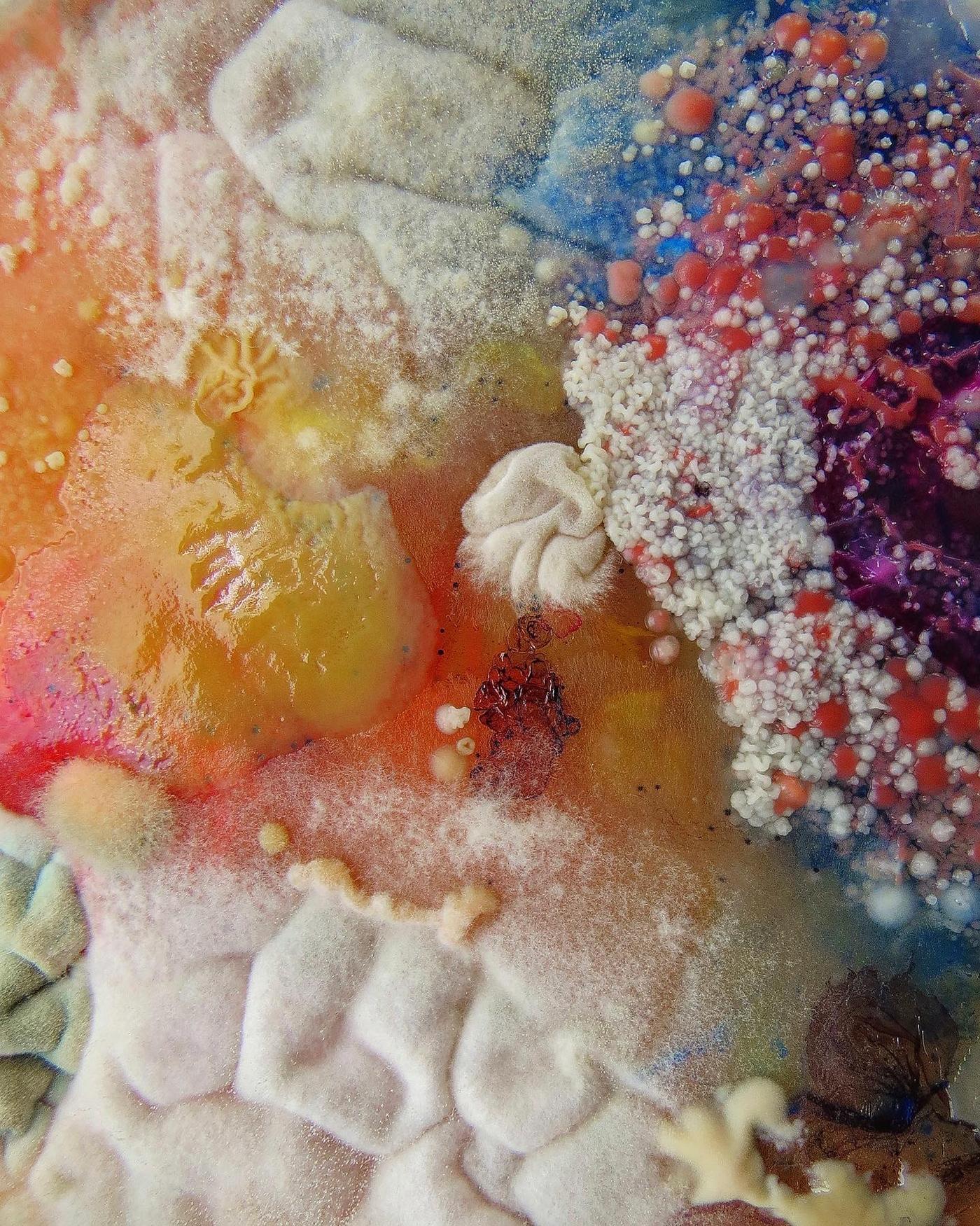 art artist background Bacteria bio bioart Biodesign closeup color contamination crop design edit Fungi grow layer mix Nature pattern science shade wallpaper