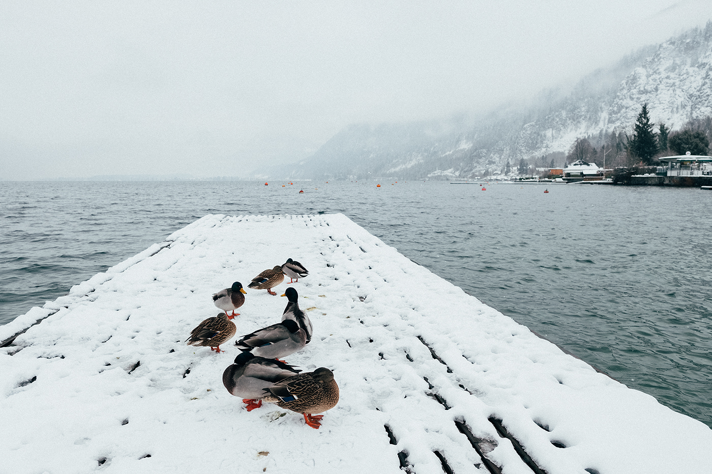 photoshop Photography  fujifilm snow winter Landscape Nature gaisberg salzburg