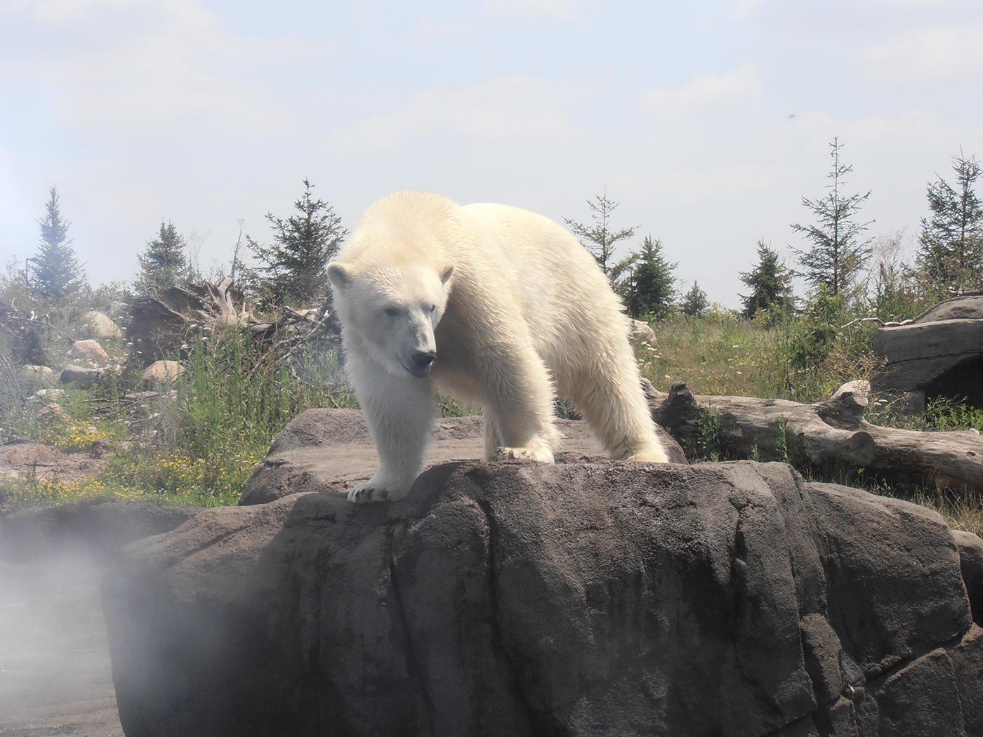 Image may contain: bear, outdoor and polar