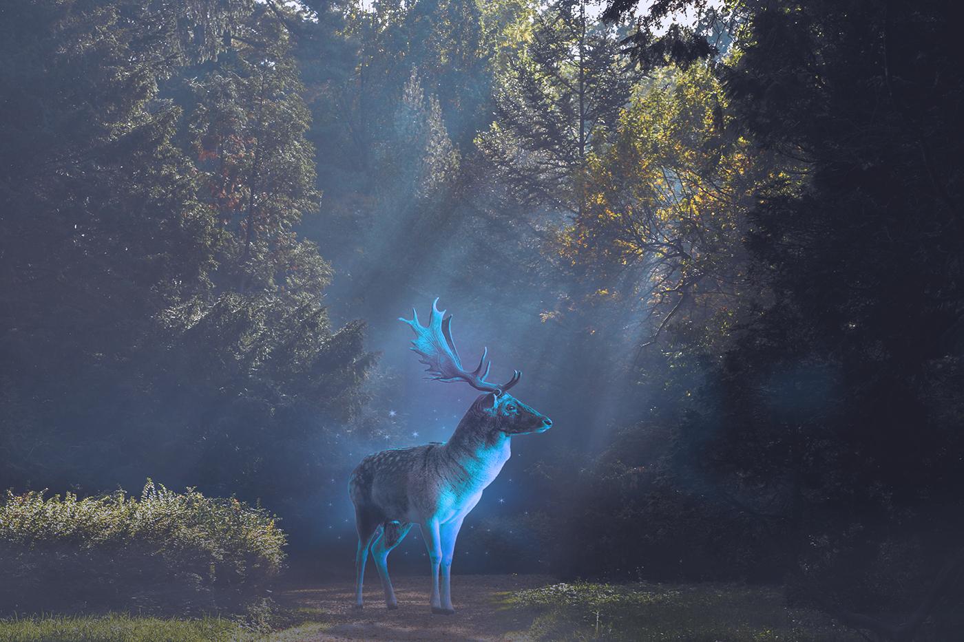 patronus spectral animal wallpaper photomontage
