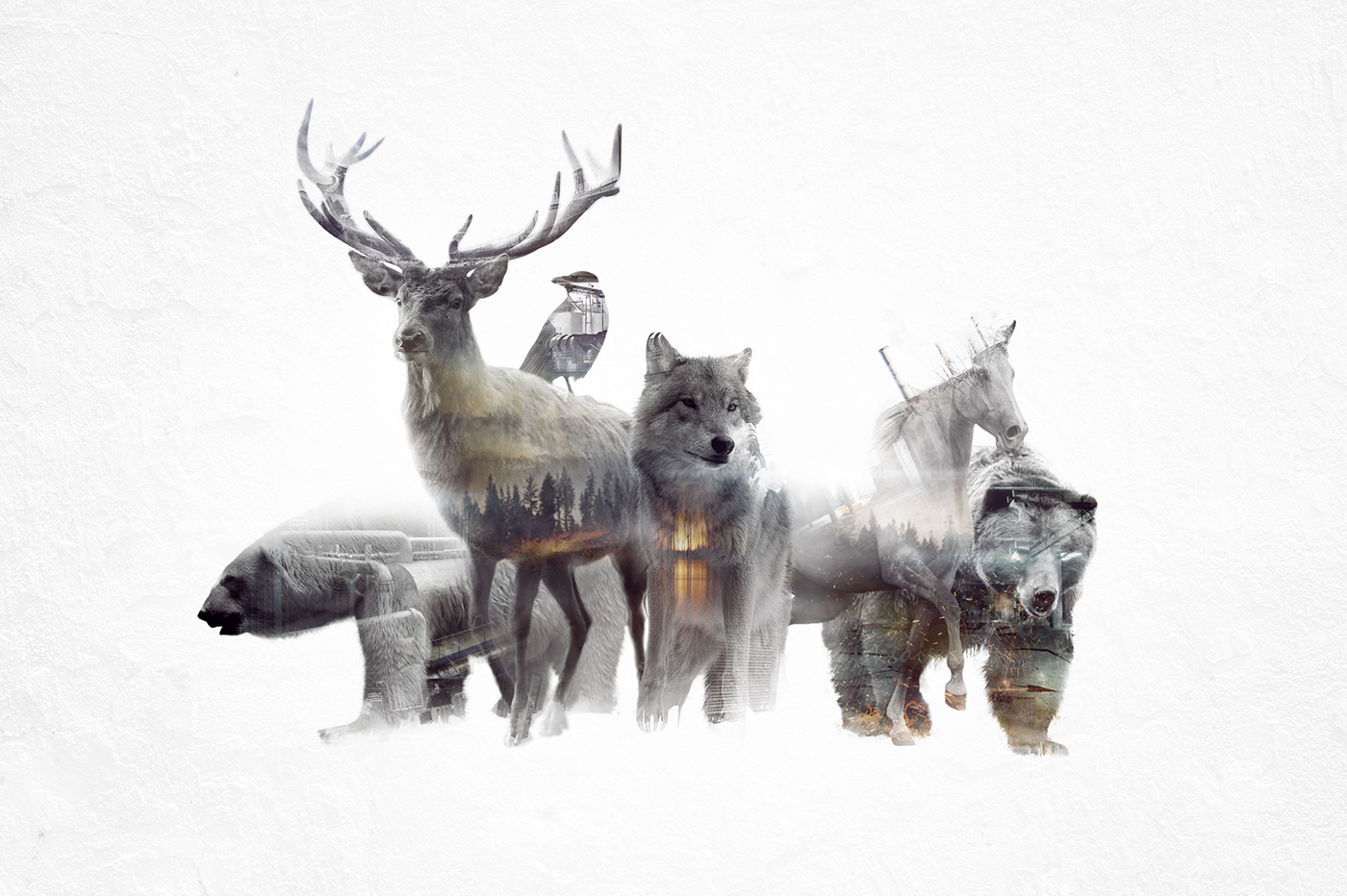 double exposure,İmages Animated with,cinemagraph,double,Exposure,gif,video,pozlama,turk,animals,wolf,horse,bear,whales,wild