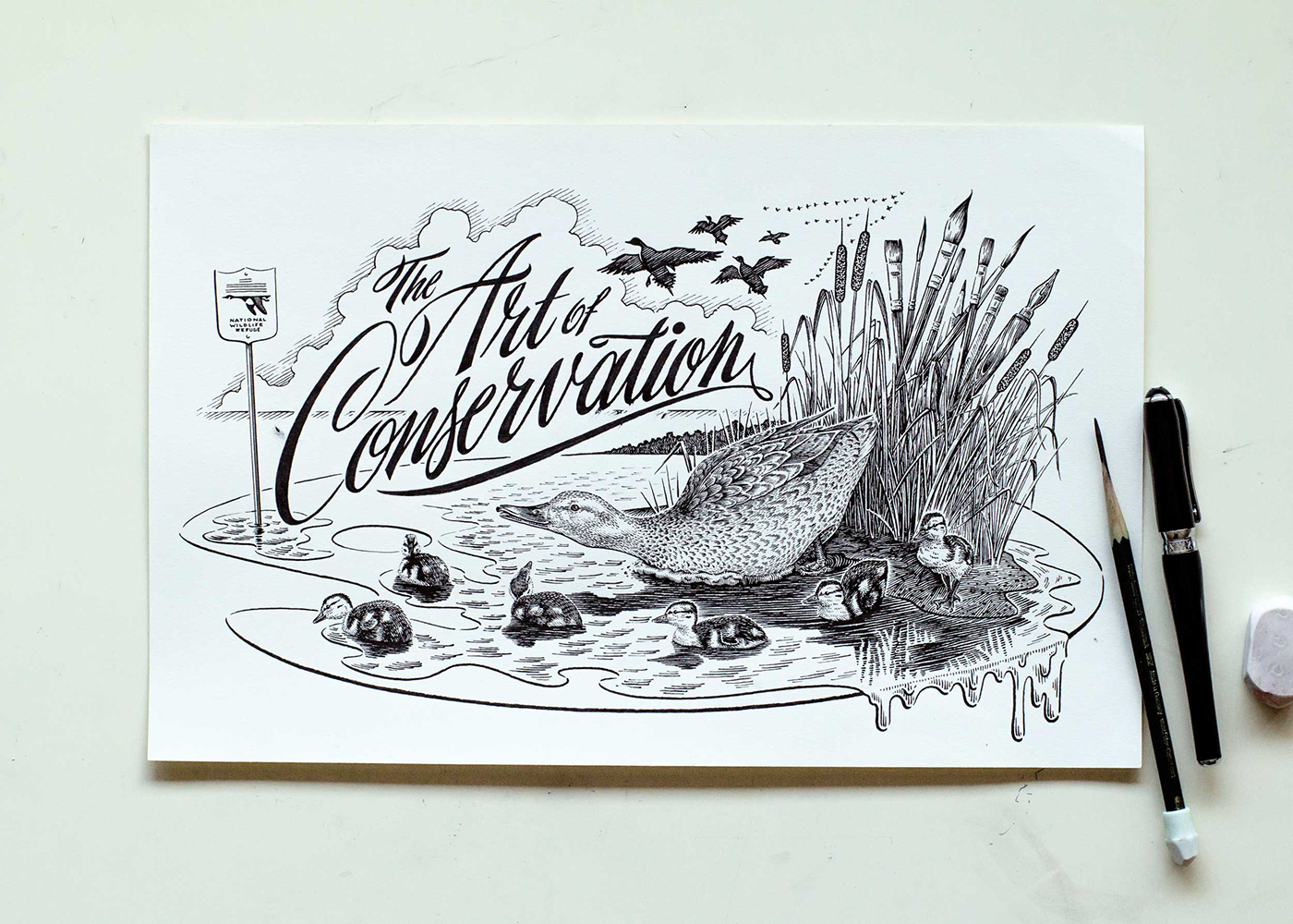 pen and ink ILLUSTRATION  conservation Nature wildlife ducks water fowl bird Hunting