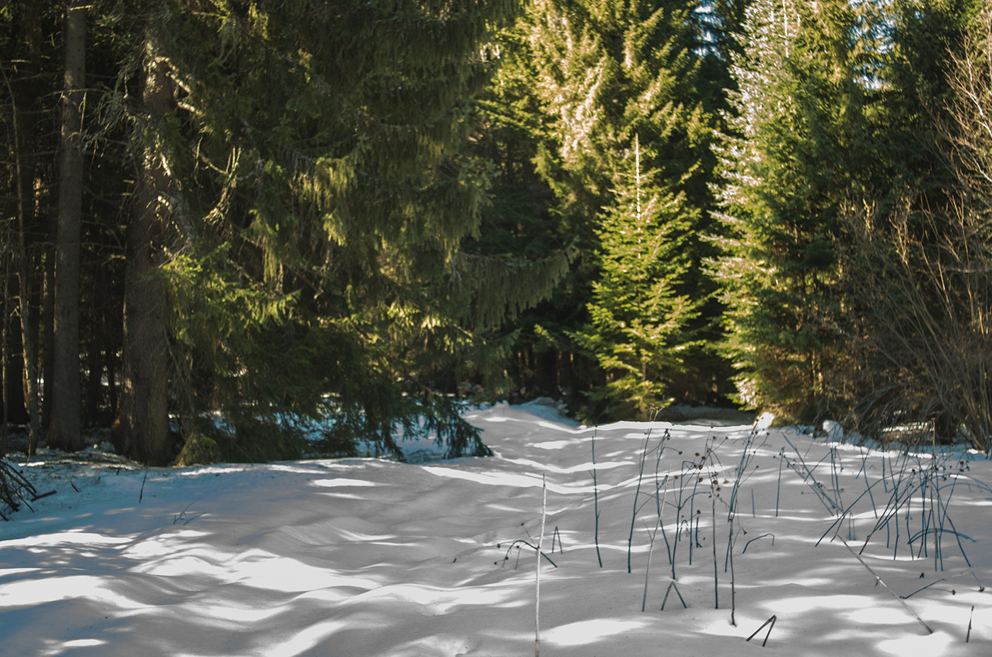 Sunshine and Snow.