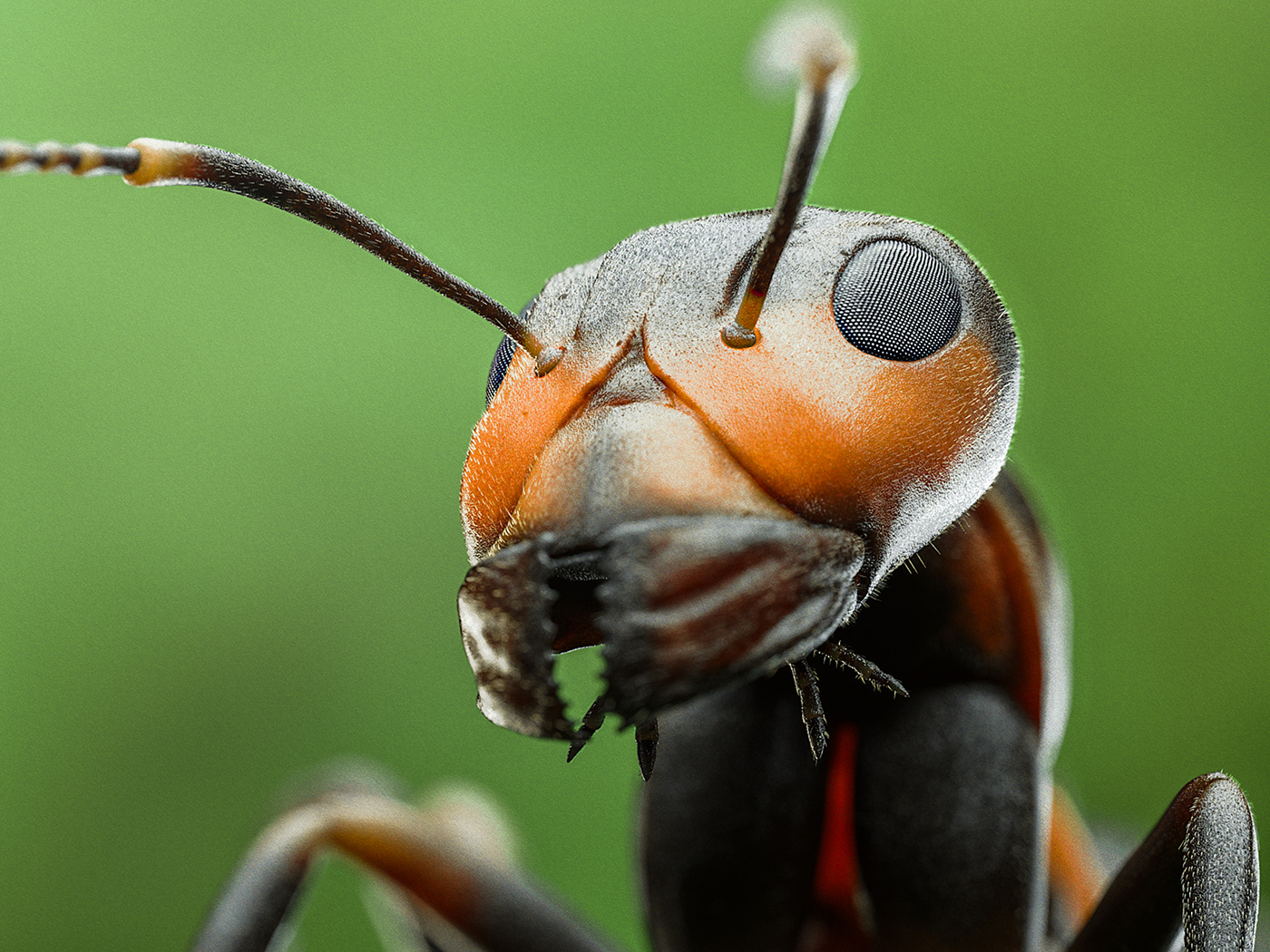 Image may contain: invertebrate, orange and animal
