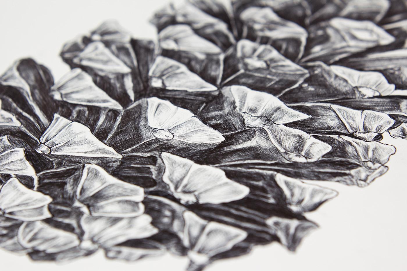 pine cone,ball pen,kookaburra,pine,fir cone