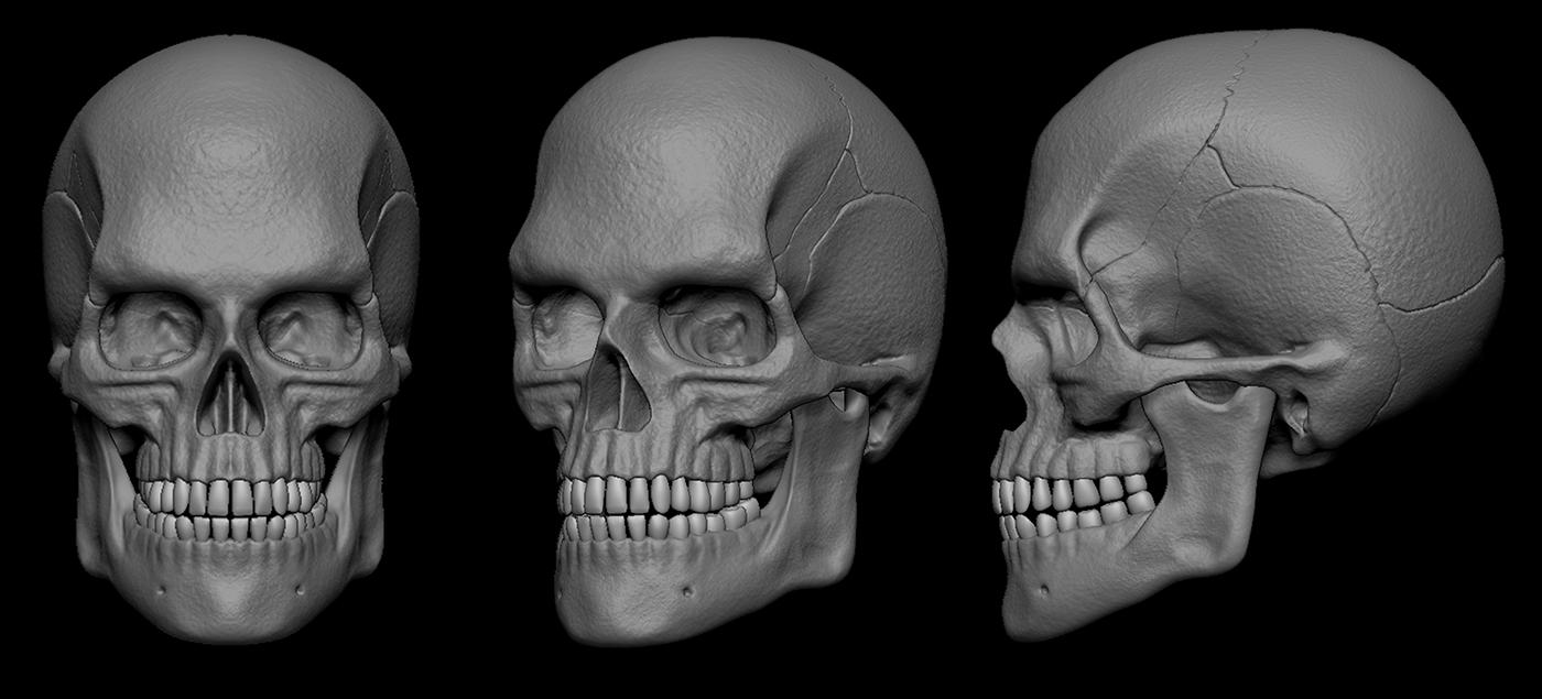 skull skulls head human 3D Zbrush face bone anatomy body