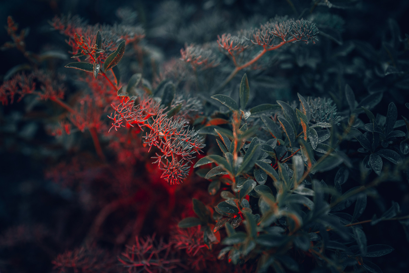 plant in red-green neon light