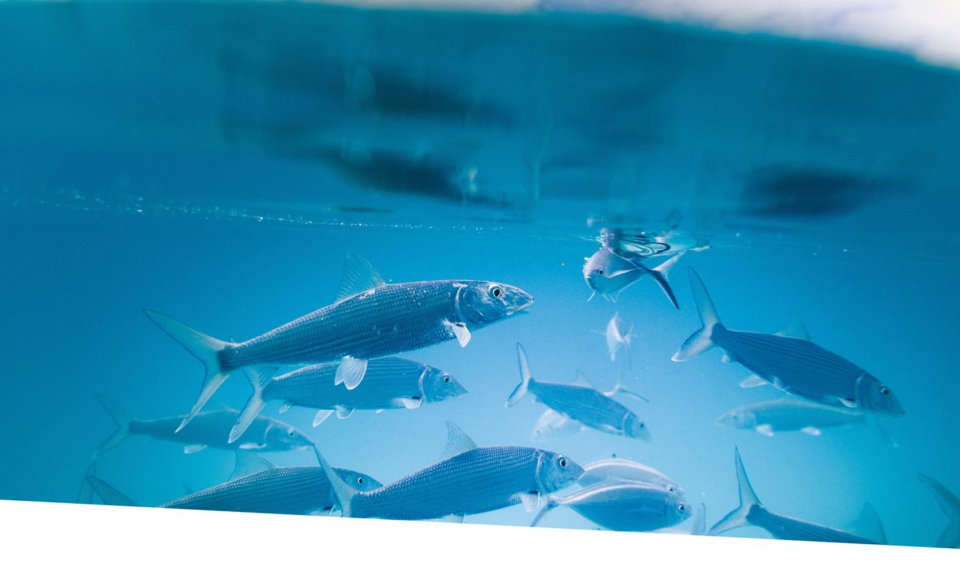 Image may contain: aquarium, fish and marine mammal