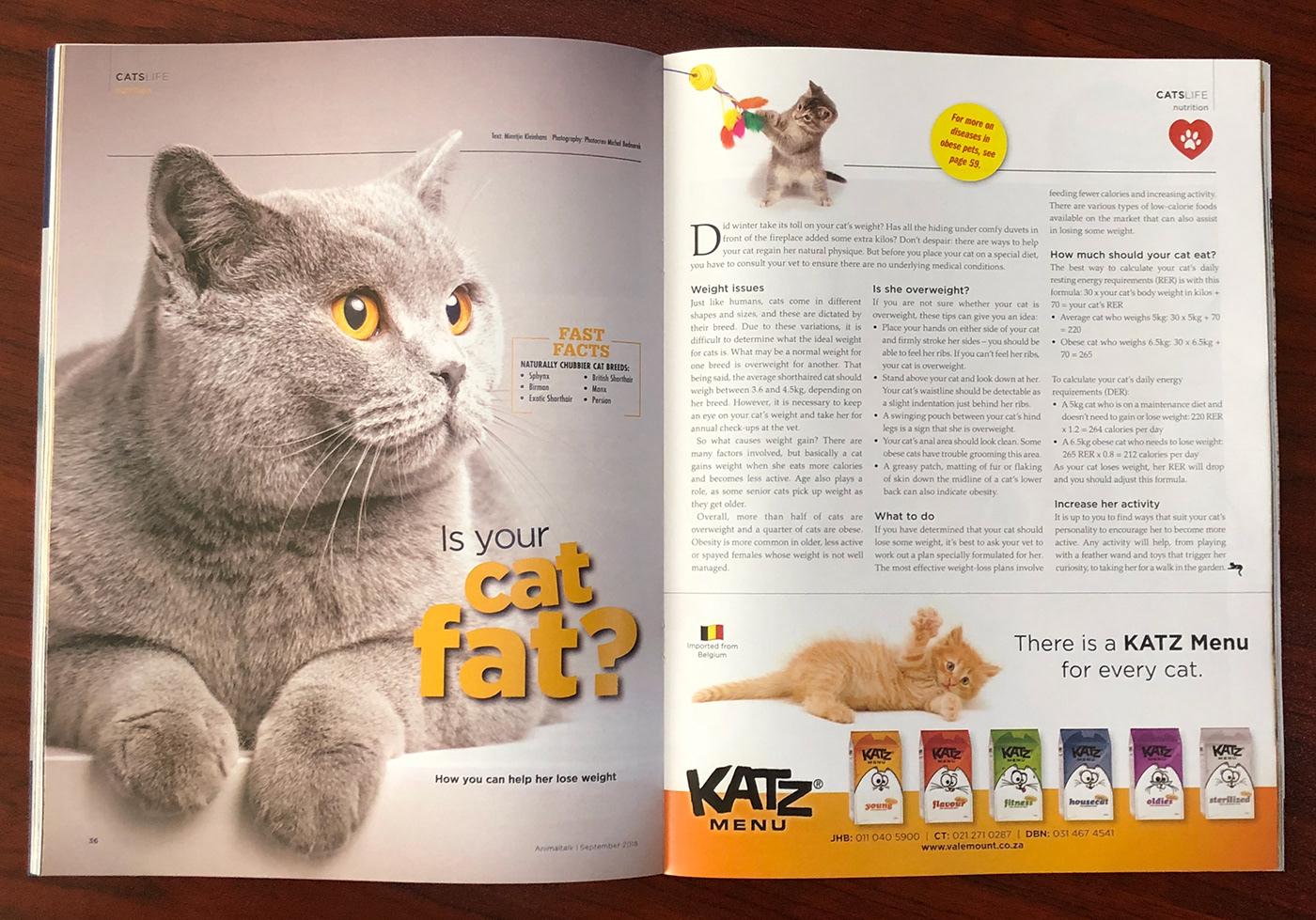 print ad design Layout Pet magazine
