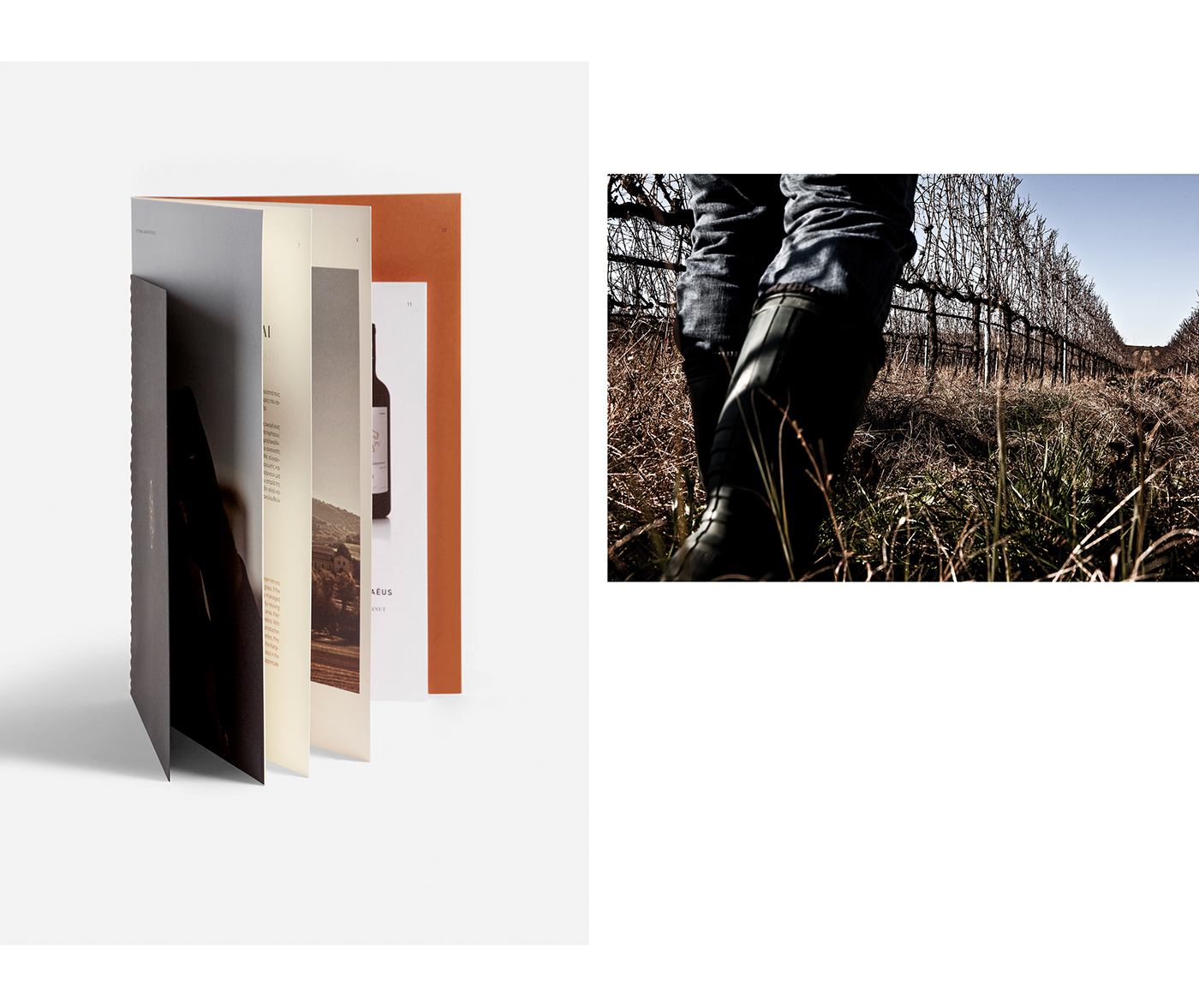 winery Photography  editorial design  book print design  Layout brochure typography   graphic design